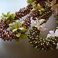 Royal orchid pikake